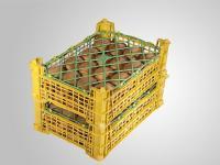 Kiwi-in-Basket.jpg