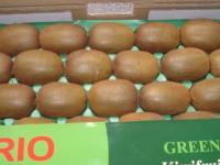 Kiwi---Harvesting7.jpg