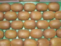 Kiwi---Harvesting1.jpg